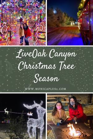 Live Oak Canyon Christmas Tree Season