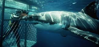 shark cage diving.png