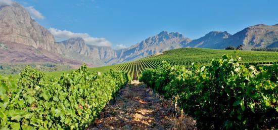 oldenburg-vineyards.jpg