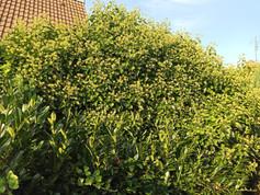 Dschungel in Wilster