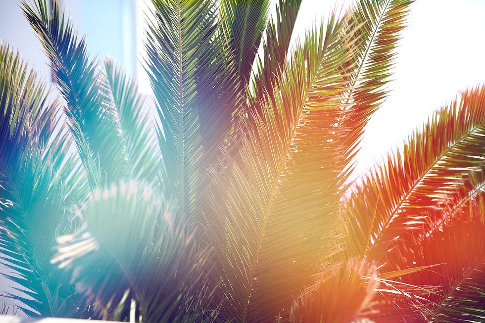 shutterstock_palmtrees.jpg