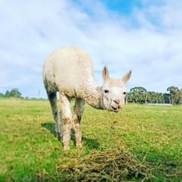 Farm Animals (4).jpg