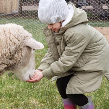 Farm Animals (1).jpg