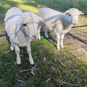 Farm Animals (7).jpg