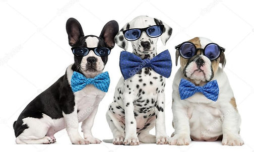 Puppy group_edited.jpg
