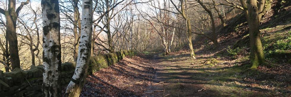 Old Walkways and Woodlands Walk