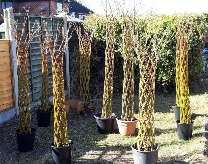 Carbon Capture Sculpture by Dragon Willow
