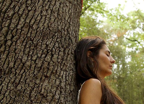 Meditación Guiada del Árbol Sagrado