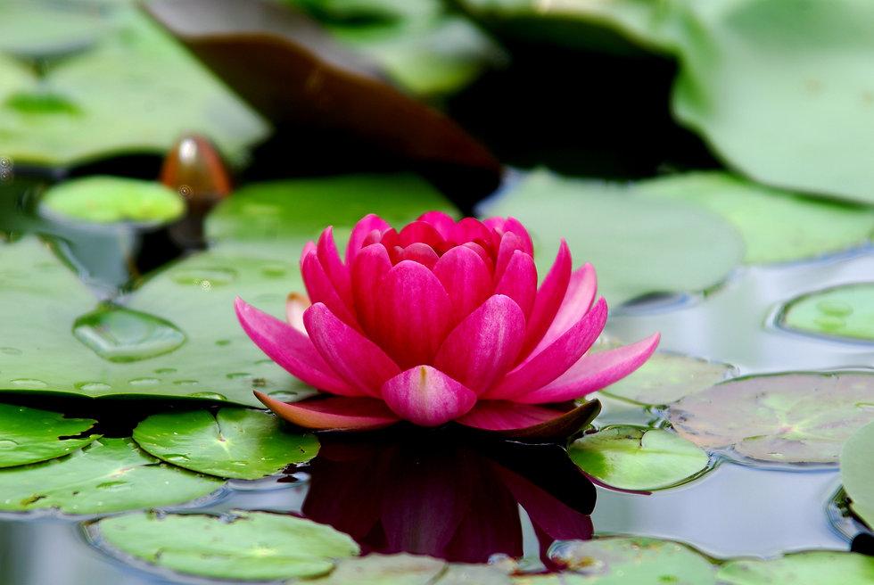 flowers-3294463.jpg