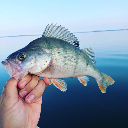 Fishing Spot laimikis