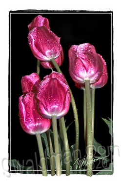 Tulip Pink Bouquet