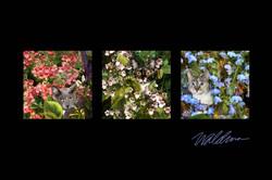 Garden Bouquet Trio
