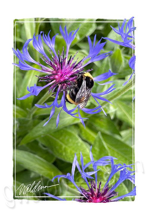 Worker Bee-5x7 art card