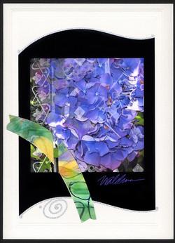 hydrangea blues-black