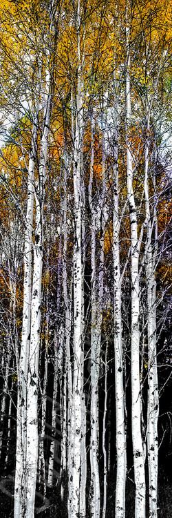 Autumn Gold Sentinels III
