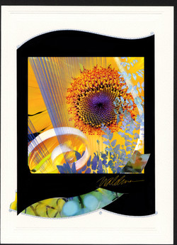 Sunflower Folly-black