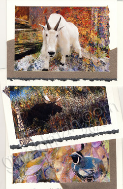 Northwest Critter Cards