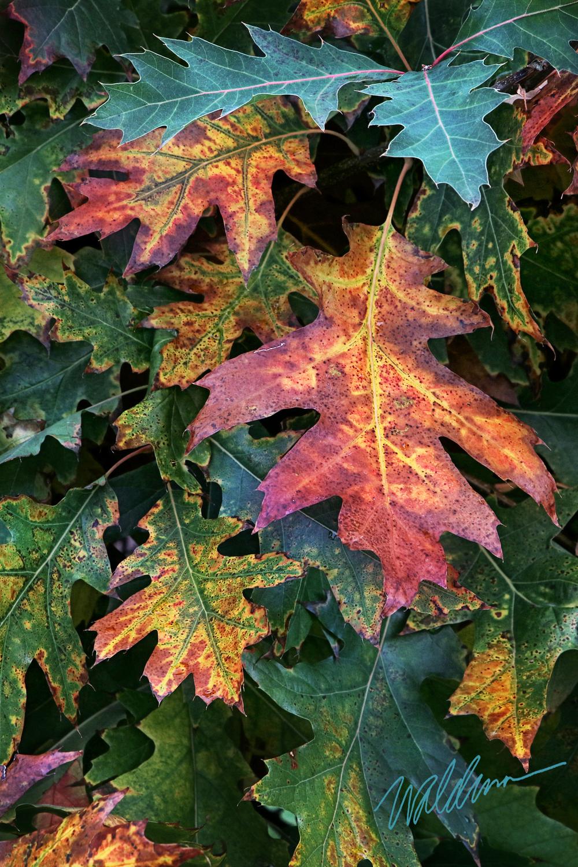 Leaf Fave