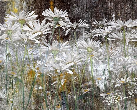 Daisy Relics-H-5x7 art card