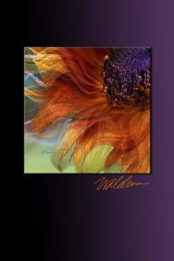 Autumn Sunflower-purple