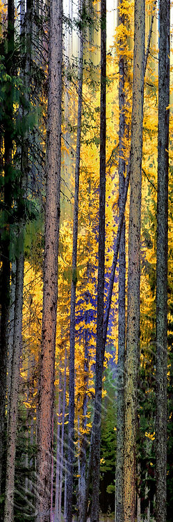 Forest Tapestry IIIA