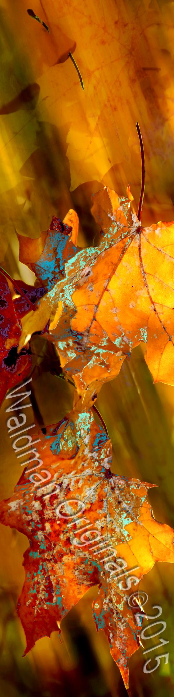 Leaf Wisps