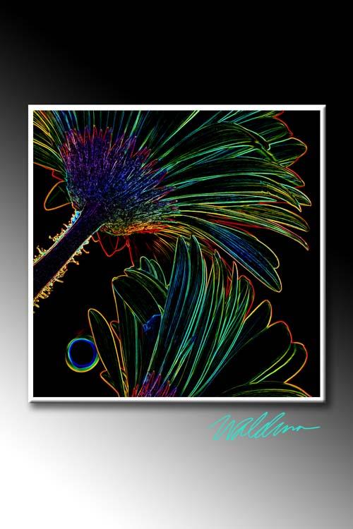 Neon Gerber-charcoal