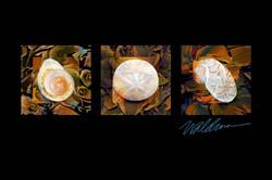 Autumn Seashell Trio