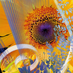 Sunflower Folly