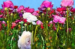 Pink Garden