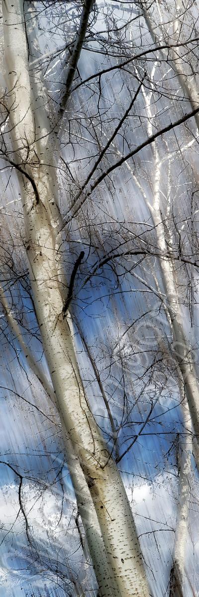 Winters Clear III