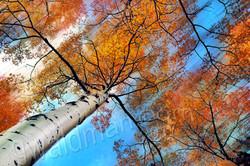 Autumn Klimt