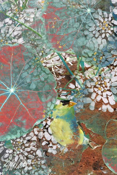 Summer Finch- 5x7 art card