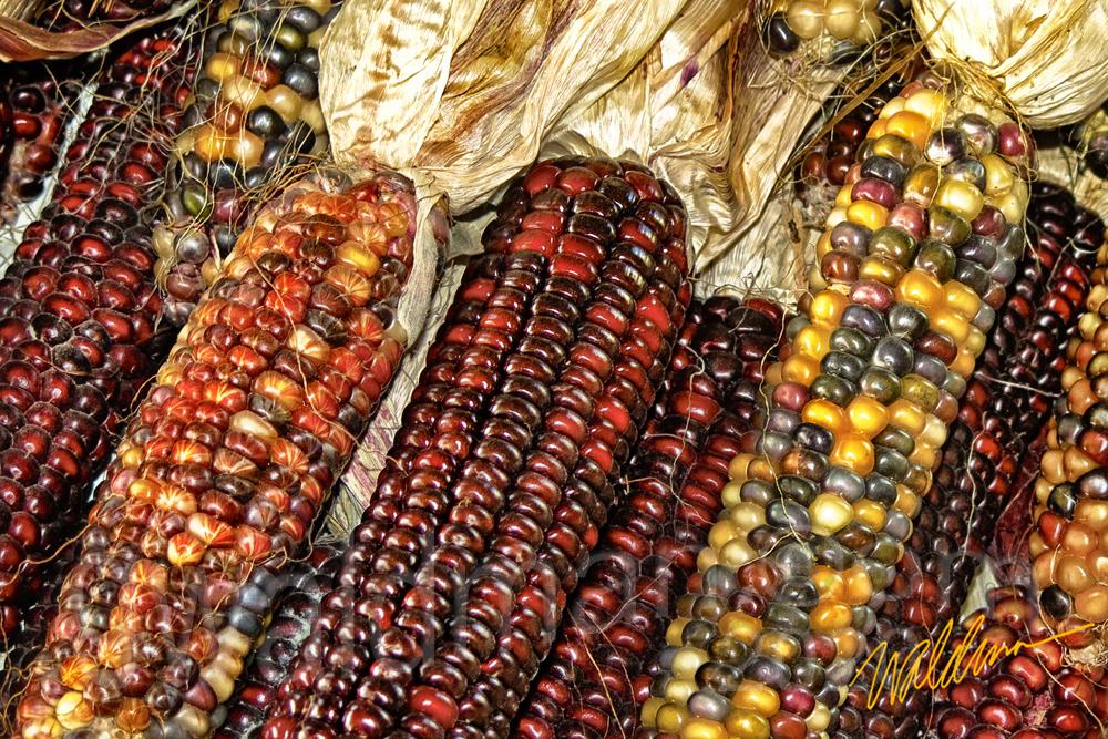 Corn Spectrum