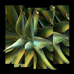Succulent Collage