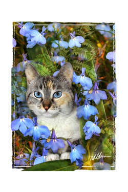 Aggie's Bouquet-edged