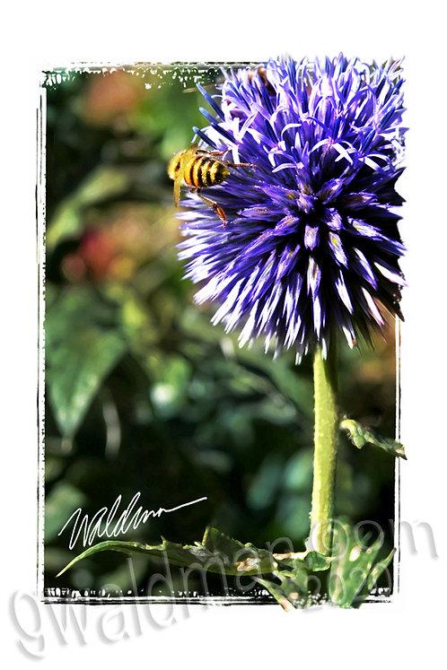 Bee Butt-5x7 art card