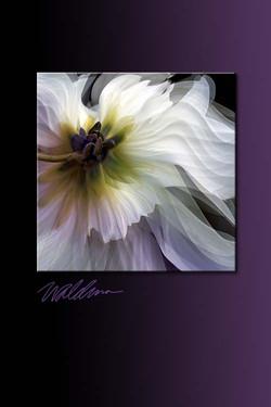 White Wave-purple