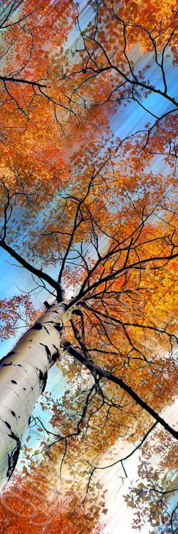 Autumn Klimt III