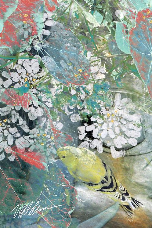 Summer Finch III- 5x7 art card