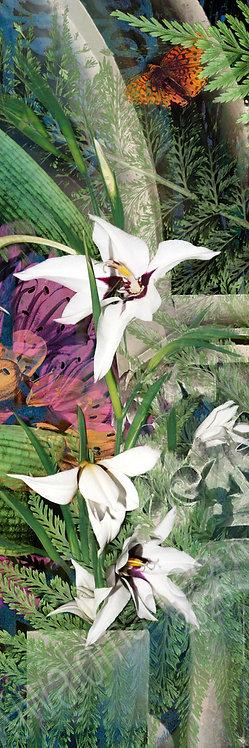 Orchid Scrolls III
