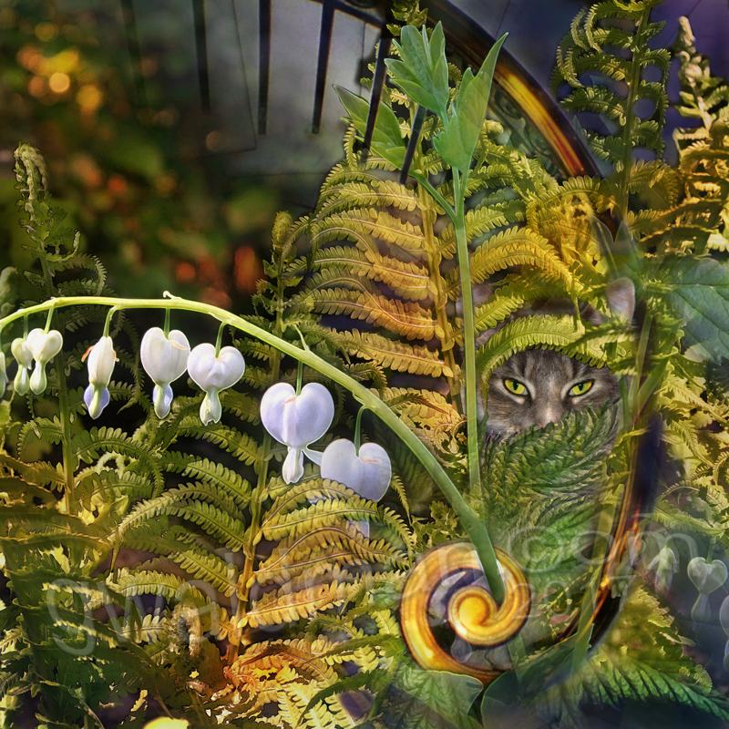 Dutch's Garden