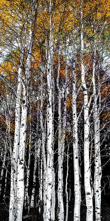 Autumn Gold Sentinels