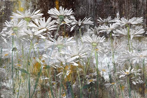 Daisy Relics - full image
