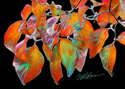 Autumn Shades of Color