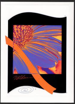 Periwinkle Sunflower-black