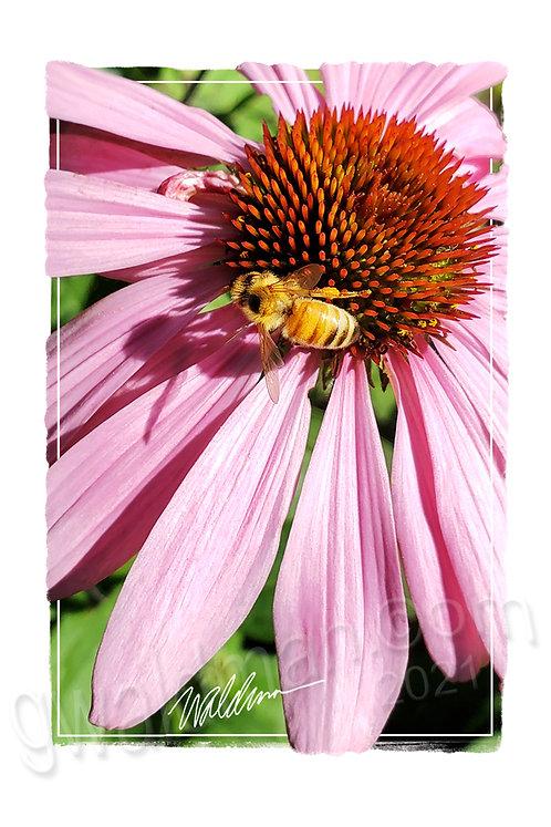 Sweet Bee-5x7 art card
