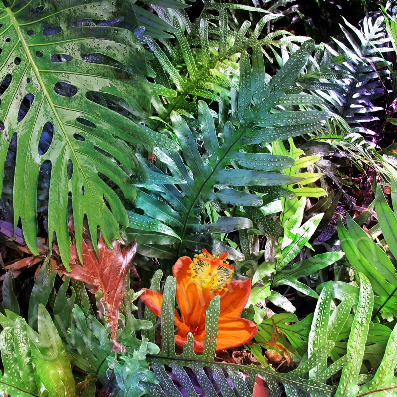 Tropics I