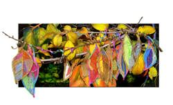 Autumn Shade II