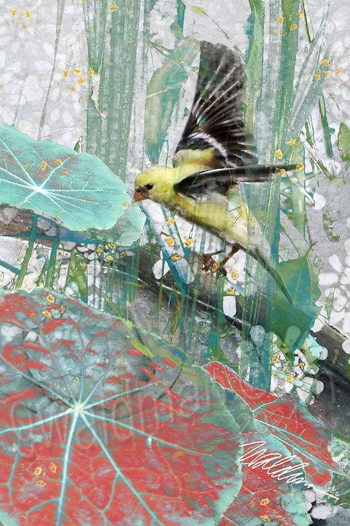 Summer Finch II- 5x7 art card